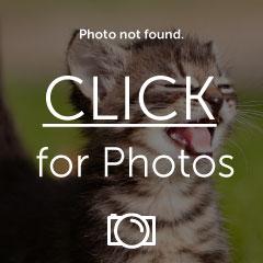 IMAG0333_zpsyxljtaps.jpg